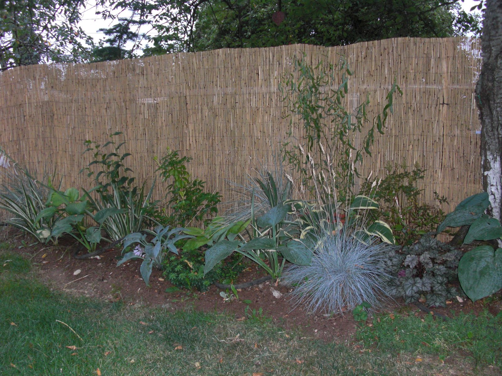 Reed Fencing Covers Ugly Chain Link Gardening In My