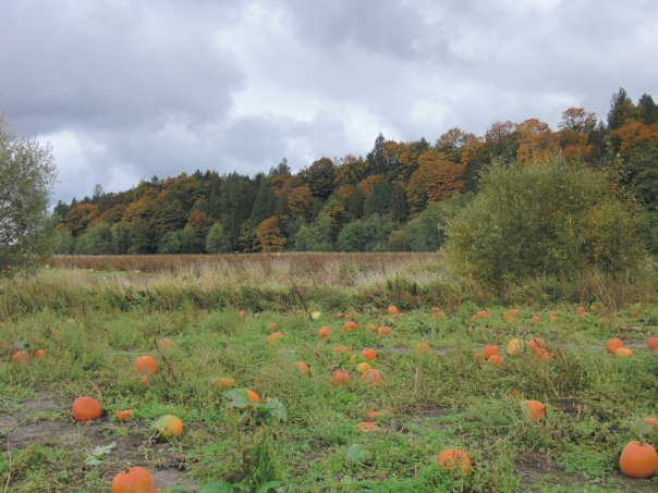 Craven Farms Pumpkin Patch