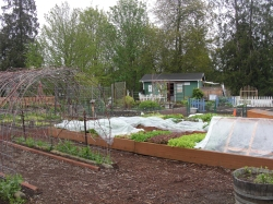 View of the Food Bank veggie garden & potting shed