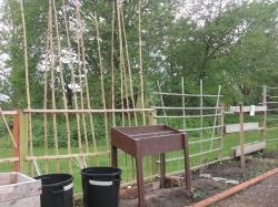 Potato plantings & vertical gardens
