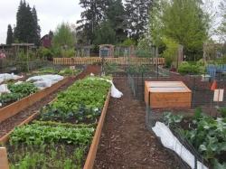 View of the veggie garden & perennial garden