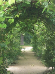 Grape Archway