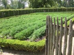 Formal veggie garden