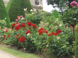 Roses at the base of 'The Thinker'