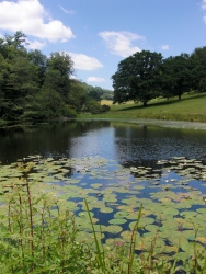 Lily pads in upper pond