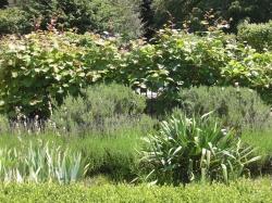 Formal garden by estate