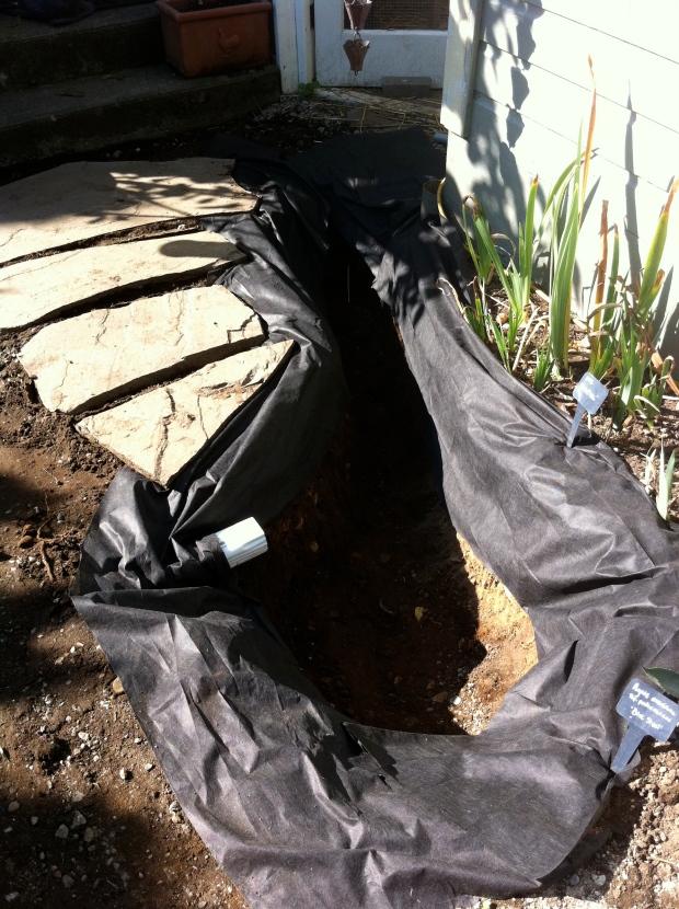 My chicken coop s carnivorous bog garden gardening in my for Garden pond waders